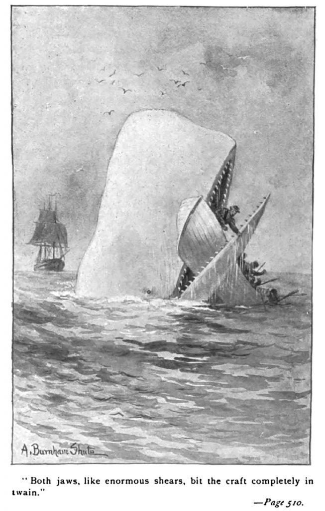 large market whale
